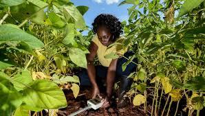 La FAO lance un projet d'inclusion des TIC à l'agriculture ...